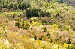 Frühling im Wald Lizenzfreie Stockbilder