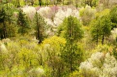 Frühling im Wald Lizenzfreies Stockfoto