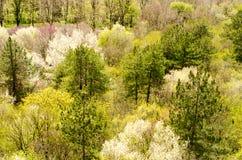 Frühling im Wald Stockfotos