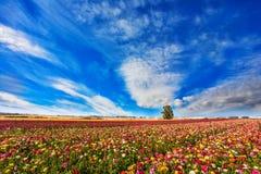 Frühling in Israel lizenzfreies stockfoto