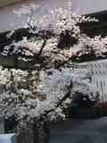Frühling ist Anfang Lizenzfreies Stockfoto