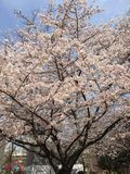 Frühling ist Anfang Stockbilder