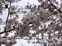 Frühling ist Anfang Lizenzfreie Stockbilder