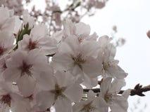 Frühling ist Anfang Stockfoto