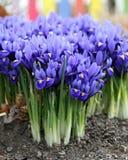 Frühling ist angekommen! lizenzfreies stockfoto
