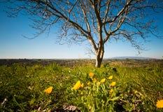 Frühling ist angekommen Lizenzfreie Stockfotografie