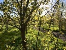 Frühling ist angekommen stockfoto