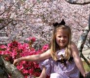 Frühling ist in der Blüte Stockbilder