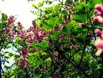 Frühling ist in der Luft Lizenzfreie Stockbilder