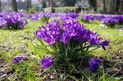 Frühling ist in der Luft Lizenzfreie Stockfotos