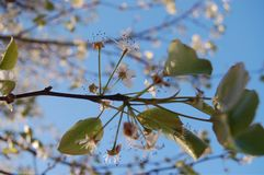 Frühling ist in der Luft Stockbild