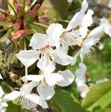 Frühling ist in der Luft: Blüten Lizenzfreie Stockbilder