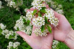 Frühling ist gekommen! Stockbilder