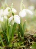 Frühling ist hier! stockfotografie