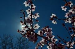 Frühling ist hier Lizenzfreies Stockfoto