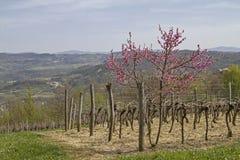 Frühling in Istria Lizenzfreie Stockfotos