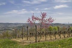 Frühling in Istria stockbilder