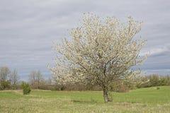 Frühling in Istria lizenzfreie stockbilder