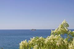 Frühling in Istria - blühender Busch stockbilder