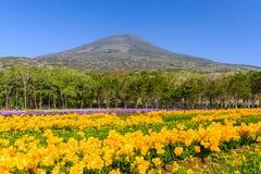 Frühling in Japan Stockbilder