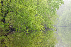 Frühling, Kalamazoo Fluss Stockfoto