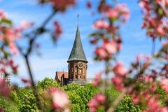 Frühling in Kaliningrad Stockfotografie