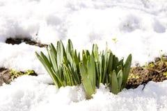 Frühling kam Lizenzfreie Stockfotografie