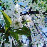 Frühling kam Lizenzfreie Stockfotos