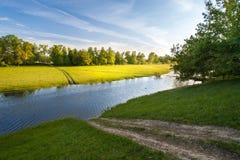 Frühling kam in Wald lizenzfreie stockfotos