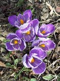Frühling knallt oben Lizenzfreies Stockfoto