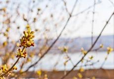 Frühling knospt Blüte Lizenzfreie Stockbilder