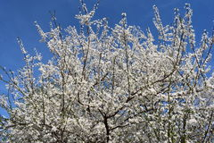 Frühling kommen zurück! stockbild