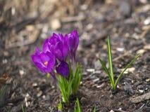 Frühling kommt Lizenzfreie Stockfotografie