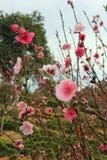 Frühling kommt Stockfoto