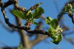 Frühling kommt Stockfotografie