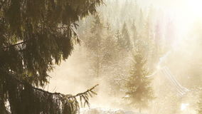 Frühling kommt schnell: Schnee schmilzt Bratenfett von den Bäumen stock video