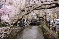 Frühling in Kyoto Lizenzfreie Stockbilder