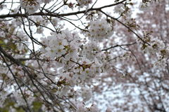 Frühling in Kyoto, Japan Lizenzfreies Stockbild