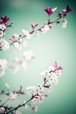 Frühling mit Blumen lizenzfreies stockfoto
