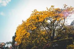 Frühling mit diesen schönen Blumen Stockfotografie