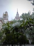 Frühling in MSU Lizenzfreie Stockfotos