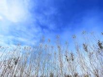 Frühling-Natur kommt zum Leben, blaue Himmel Stockbilder