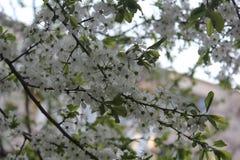 Frühling Nture Lizenzfreies Stockbild