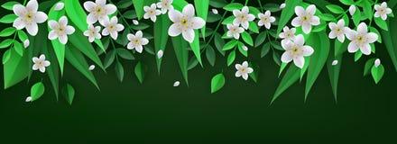 Frühling oder Sommerblumengrenze mit weißen Apfel- oder Kirschblumen und frischen Pflanzenblättern auf dunkelgrünem Hintergrund Stockbild
