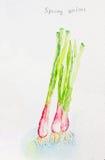 Frühling onion'watercolor gemalt Lizenzfreies Stockbild