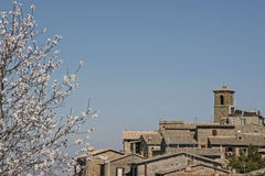Frühling in Orvieto. Flowering cherry tree in front of an old city district of Orvietos Royalty Free Stock Photos