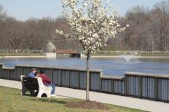 Frühling am Park Stockbilder