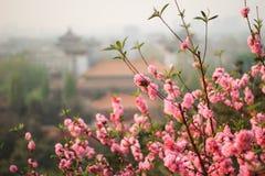 Frühling in Peking Stockbild