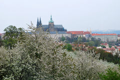 Frühling in Prag Stockbilder