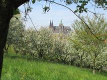 Frühling in Prag Lizenzfreies Stockbild
